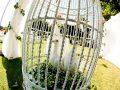 Porumbei nunta Bucuresti