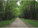 Drum spre manastire - Manastirea Bradatel #2